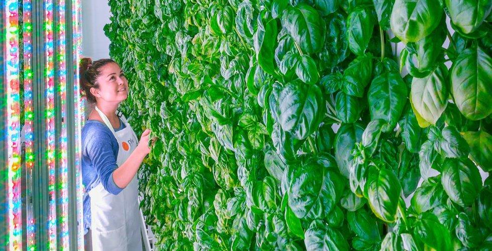 Breakit - Plenty får in 1,6 miljarder till sitt odlingsprojekt