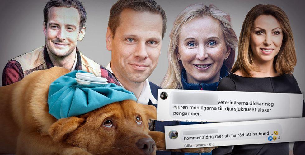 Sjuka hundar, arga djurägare och hungriga riskkapitalister – är nätveterinärerna nästa succébransch?
