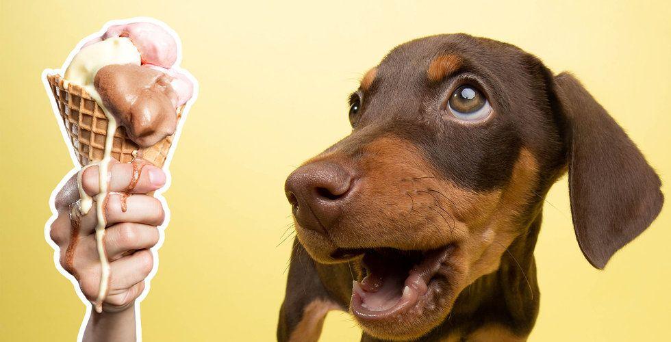 Hundglassen avslöjar: Högkonjunkturen är över