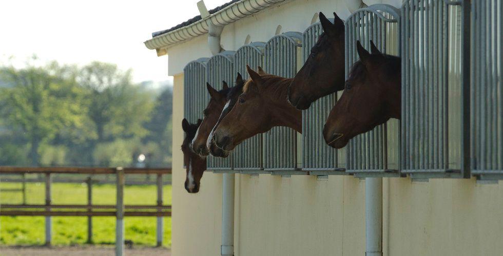 Hoppla! Videquus ska hjälpa dig att hålla koll på din häst