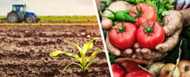Coop satsar på närproducerad mat på nätet