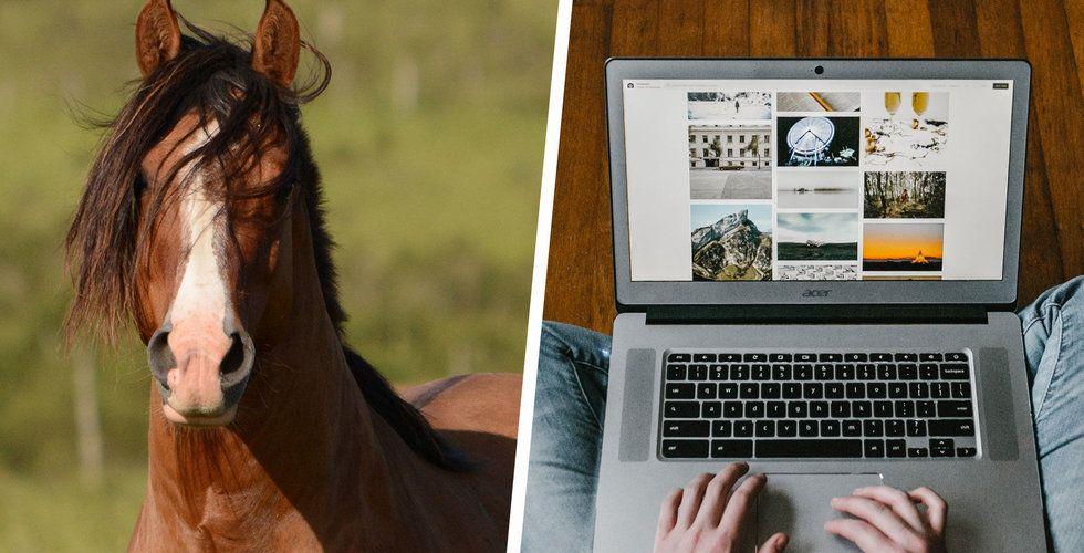 Hästbutiken Myone ansöker om konkurs