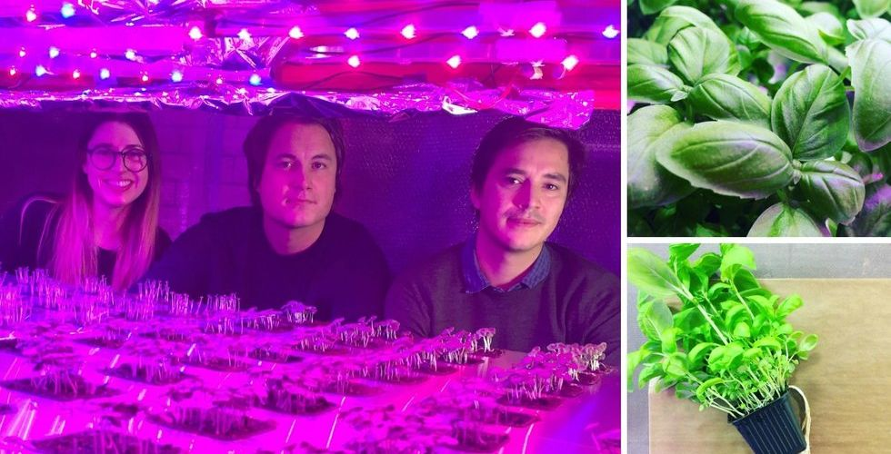 Odlar grödor i nedlagt värmeverk - nu intar Grönska matbutiken