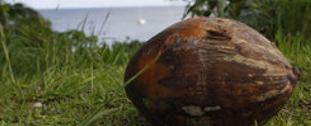 Niue får ny chans att strida om .nu – efter beslut i hovrätten