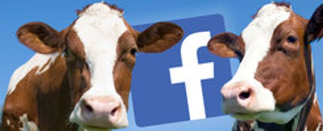 Facebook-grupperna kan bli kassakor – trots få medlemmar