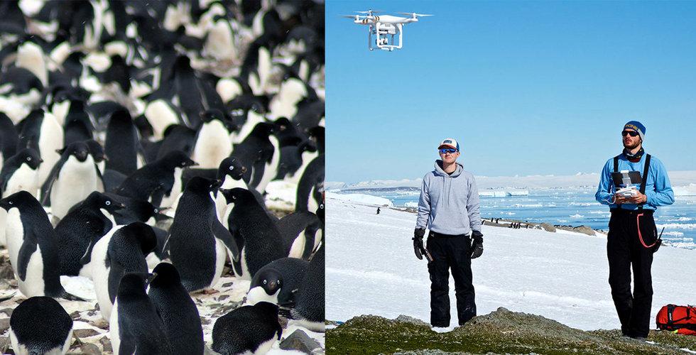 Jättekoloni med pingviner upptäckta från rymden