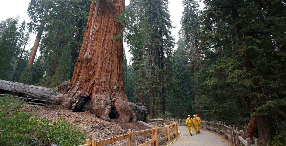 Klarnas storägare Sequoia ser coronaviruset som en svart svan