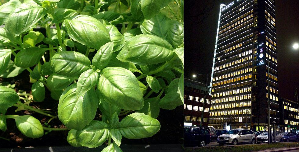 Breakit - Grönsaksodling tar form under jorden – i centrala Stockholm