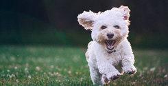 Breakit - Två husdjurskedjor springer mot börsen – rådgivare utsedd