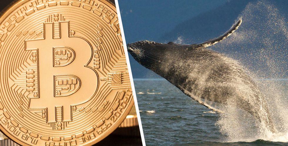 Breakit - Varning för bitcoin-ras – 1000 personer kan sitta på hälften av kryptovalutan
