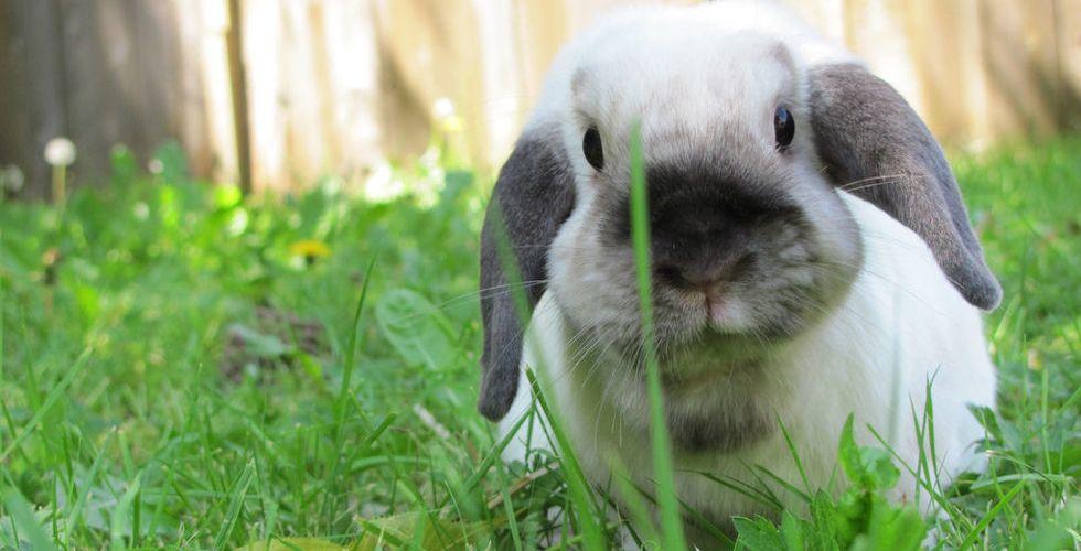 Breakit - Analysföretag: Nu är det ute med unicorns – 2016 är kaninernas tid