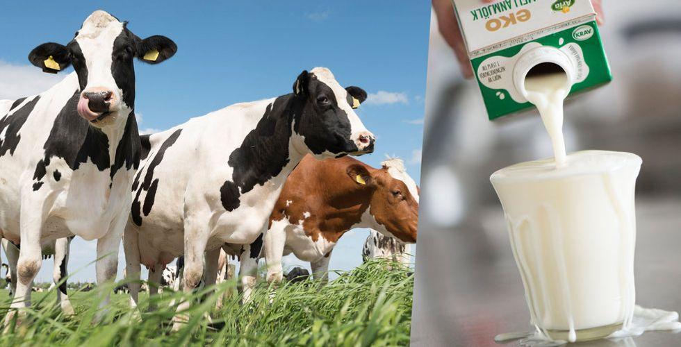 Alla vill betala mer för svensk mjölk – så varför höjs inte priset?
