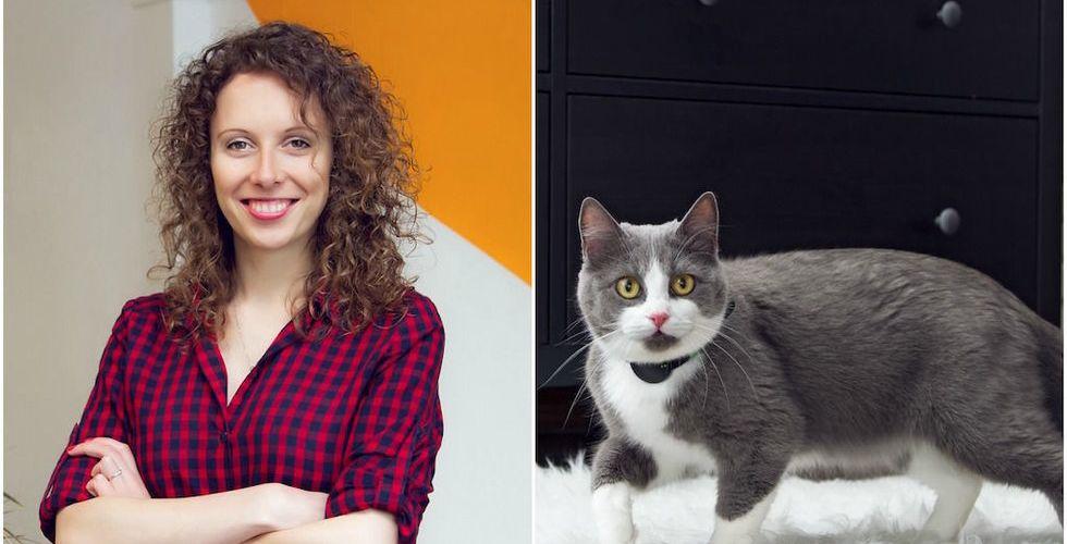 Breakit - Det smarta halsbandet Moggie vill revolutionera kattälskarnas liv