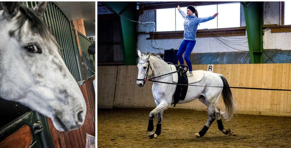 """Varmt mottagande för Equilab – bolaget bakom """"Runkeeper för hästar"""""""