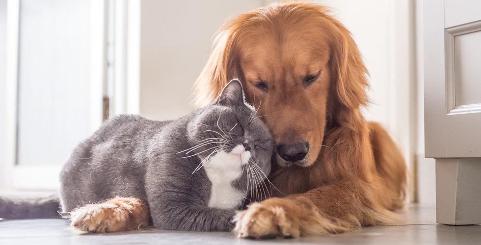 Almi Invest satsar på Alertix – ska upptäcka cancer hos husdjuren