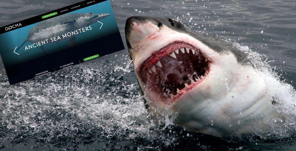 """Hajar! Böldpest! Skeppsvrak! Här är Bonniers nya """"Netflix-utmanare"""""""