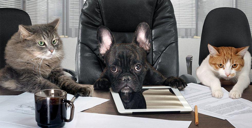 Kan du som anställd få optioner – och borde du försöka få det?